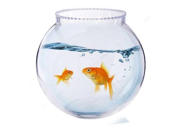 Fish-pot