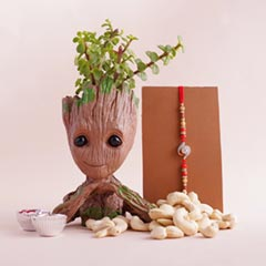 AD Rakhi N Jade Plant with Groot Container