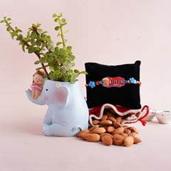 Netflix Rakhi N Jade Plant with Big Elephant Bro and Lil Sis Container
