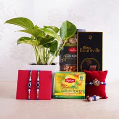 Three Rakhis with Chocolate Green Tea N Money Plant in Mug