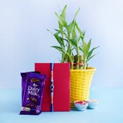 Evil Eye Rakhi with Dairy Milk N Lucky Bamboo Plant