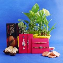 Two Designer Rakhis with Couple Rakhi N Plants Combo