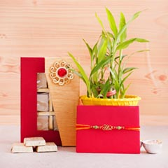 Lucky Bamboo Plant with Assorted Chocolates N Rakhi for Brother