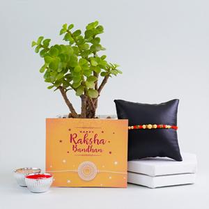Jade Plant with Beaded Rakhi